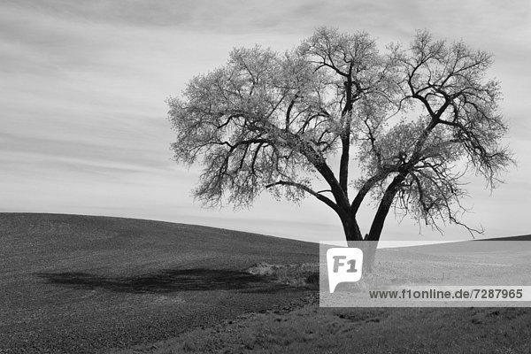 Baum  Feld  Einsamkeit