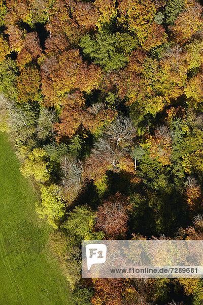 Herbstlicher Mischwald an einer Wiese  Luftbild Herbstlicher Mischwald an einer Wiese, Luftbild