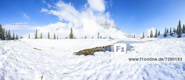 Hochmoortümpel am Hochkönig  Berchtesgadener Alpen  Salzburger Land  Österreich