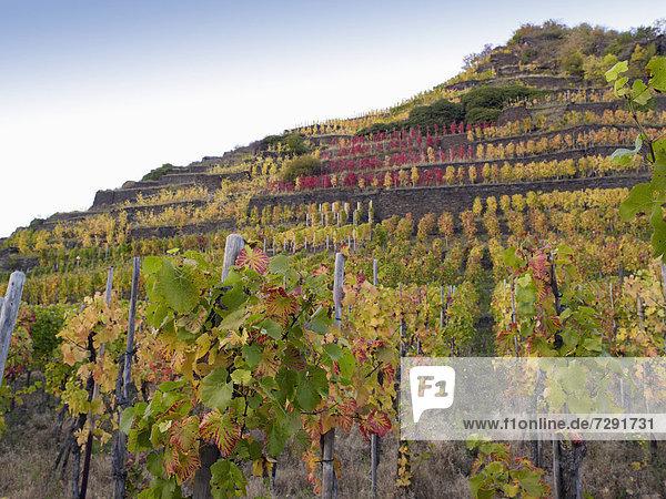 Germany  Rhineland Palatinate  View of vineyards at Ahr Valley