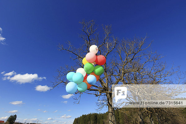Many colourful balloons in a green landscape  Allgaeu  Germany  Europe