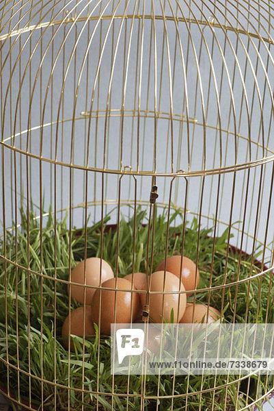 Ein Haufen brauner Eier auf Gras in einem Vogelkäfig. Ein Haufen brauner Eier auf Gras in einem Vogelkäfig.