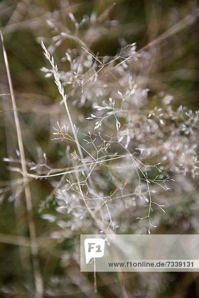 Selektiver Fokus auf eine im Freien wachsende Pflanze