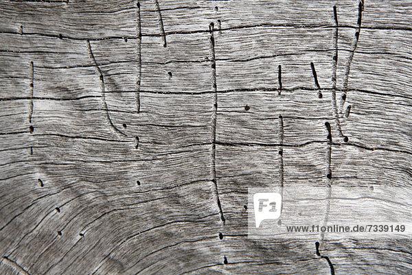 Linien und Löcher von Termiten auf einem Totholz