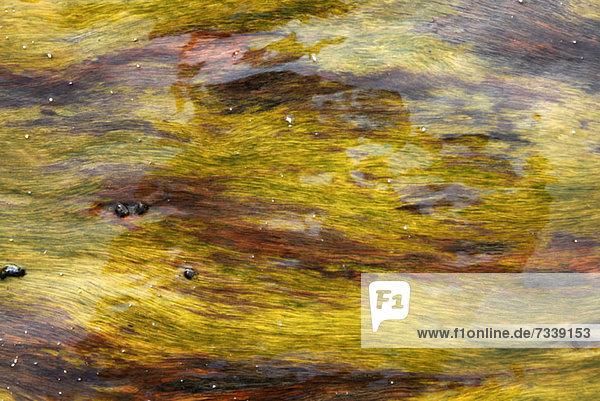 Im Wasser schwimmende Algen  Vollrahmen