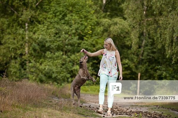 Frau Labrador Retriever spielen