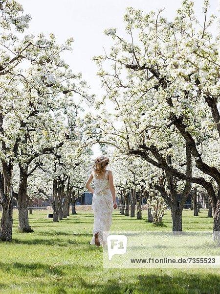 Frau  blühen  Obstgarten