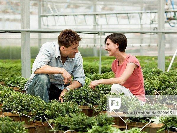 Vereinigte Staaten von Amerika  USA  Pflanze  auswählen  Mittelpunkt  Erwachsener  Treibhaus  Salem  Utah