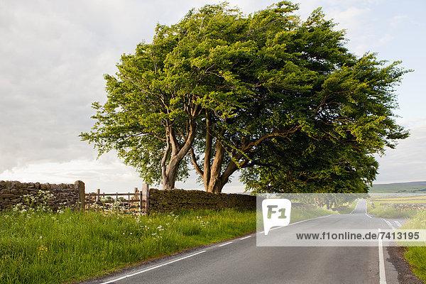 Baum mit Blick auf die Landstraße