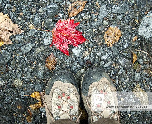 Detail  Details  Ausschnitt  Ausschnitte  Vitalität  folgen  Pflanzenblatt  Pflanzenblätter  Blatt  Stiefel  wandern  rot  Maine