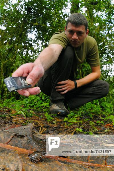 Tropisch  Tropen  subtropisch  Wald  Frosch  aufzeichnen  Gespräch  Gespräche  Unterhaltung  Unterhaltungen  Forscher  Beruf  Erwachsener  März  Ruanda