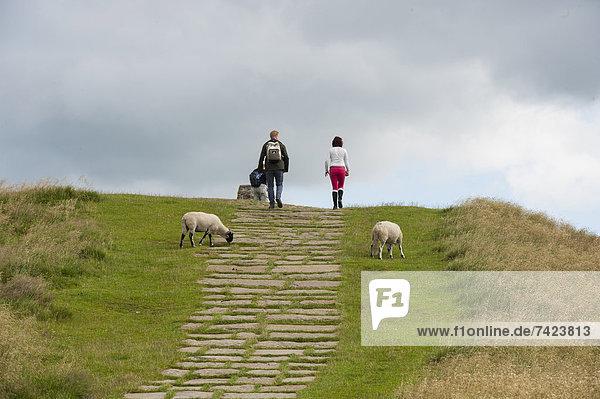 Erde  Erdreich  Boden  Schutz  Weg  August  Derbyshire  England  Erosion  Kalkstein