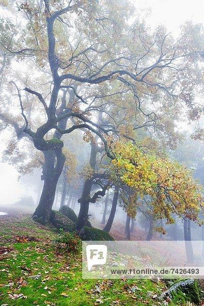 Fog at La Graja gorge in the Sierra de Gredos Piedralaves Ávila Castilla León Spain
