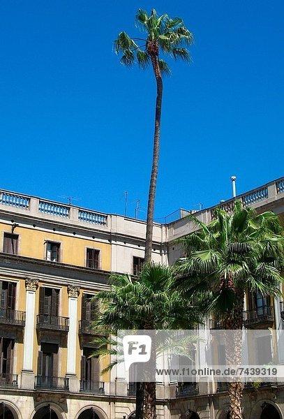Barcelona  Plaza Real  Spanien