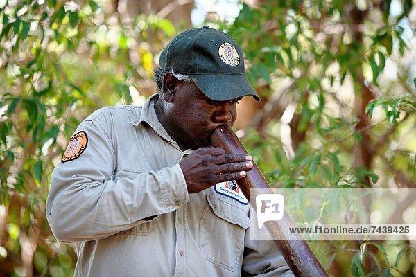 Aboriginal Tour Guide demonstrates a Digeridoo Kakadu National Park Northern Territory  Australia