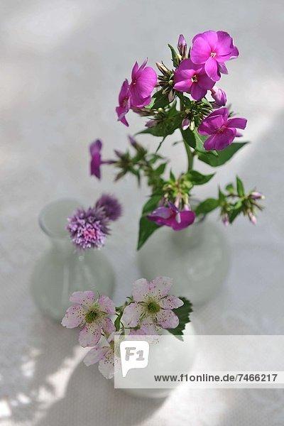 Blume  Blumenvase  3