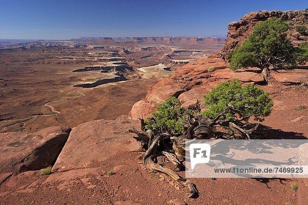 Vereinigte Staaten von Amerika  USA  Nordamerika  Canyonlands Nationalpark  Utah