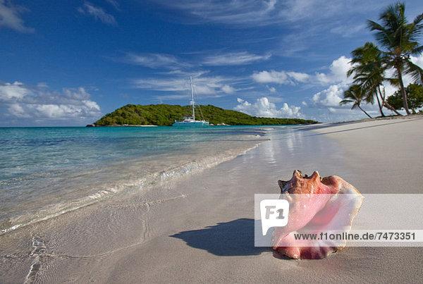Muschelschale am tropischen Strand