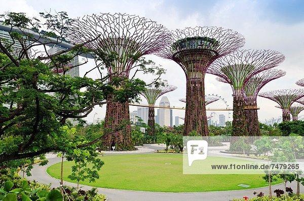 Hintergrund  Jachthafen  Sand  Garten  Bucht  Hain  Singapur
