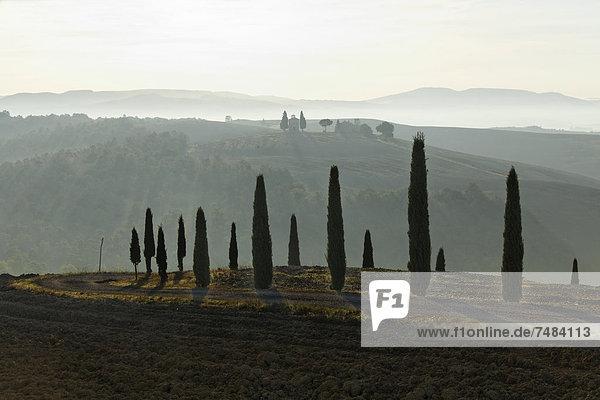 Morgenstimmung  Hügellandschaft im Herbst  Blick auf Kapelle Vitaleta  Val dÆOrcia  Orcia-Tal  UNESCO-Weltkulturerbe  Region Toskana  Provinz Siena  Italien  Europa