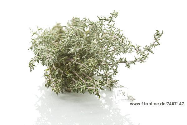 Gartenthymian auf weißem Grund  Nahaufnahme