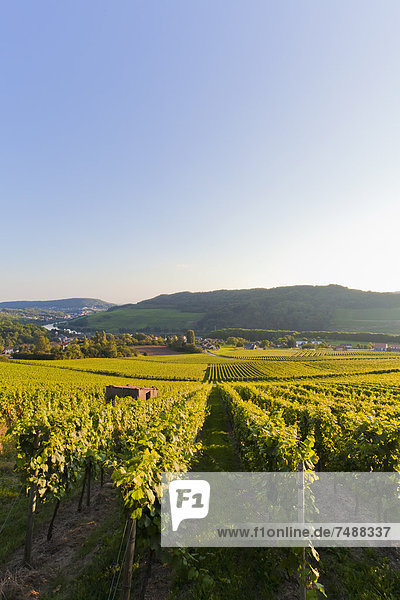 Deutschland  Saarland  Blick auf die Weinberge