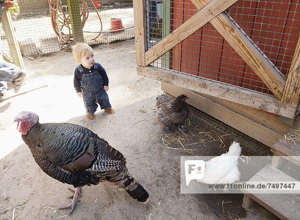 Europäer Junge - Person Huhn Gallus gallus domesticus Bauernhof Hof Höfe