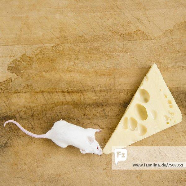 Scheibe  weiß  Käse  schießen  Studioaufnahme Scheibe ,weiß ,Käse ,schießen ,Studioaufnahme