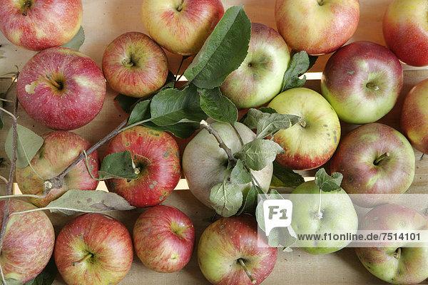 Äpfel aus Bioanbau  diverse Sorten