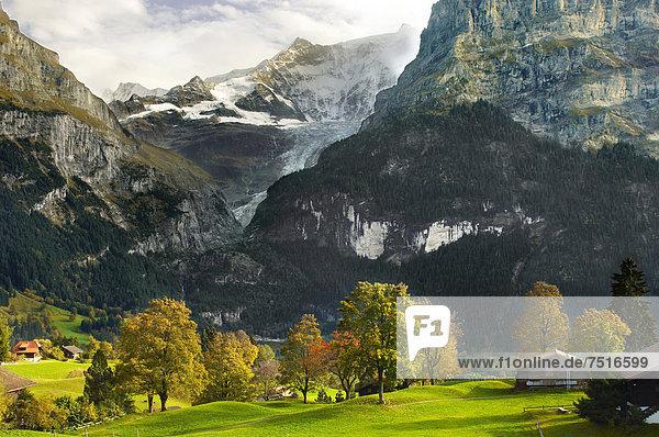 hoch oben Europa Gebäude Berg Wiese Grindelwald schweizerisch Schweiz