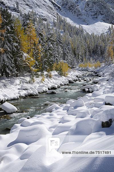 Farbaufnahme Farbe Europa Baum Herbst Lärche Engadin Schweiz verschneites Val Roseg Kanton Graubünden