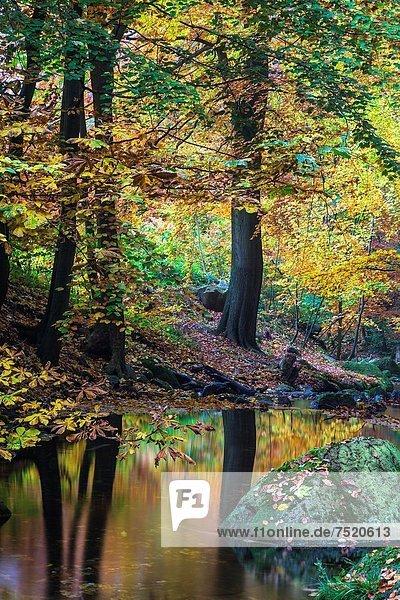Europa Wald Herbst Deutschland Europa,Wald,Herbst,Deutschland