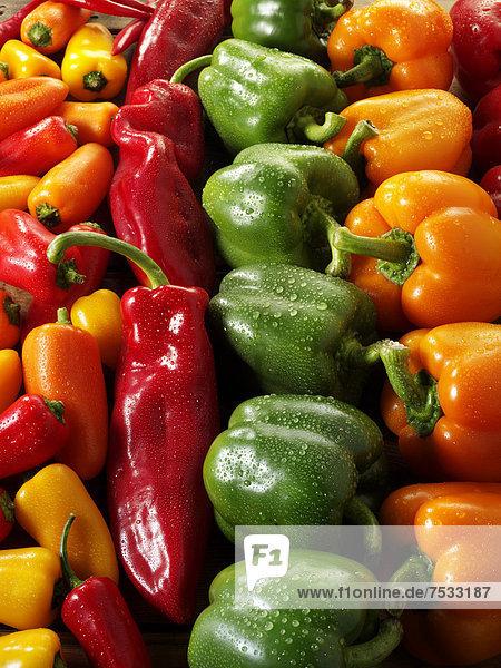 Frischer Paprika  rot  grün  gelb und orange