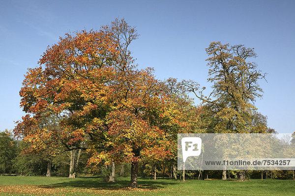 Herbst im Naherholungsgebiet am Decksteiner Weiher  Köln  Nordrhein-Westfalen  Deutschland  Europa