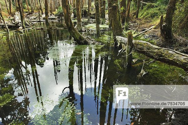 Wangyou Forest in Nantou  Taiwan  China  Asia