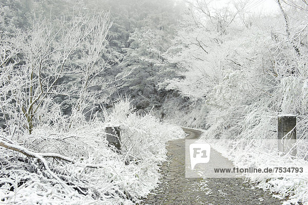 Winter landscape  Wuling  Taiwan  China  Asia