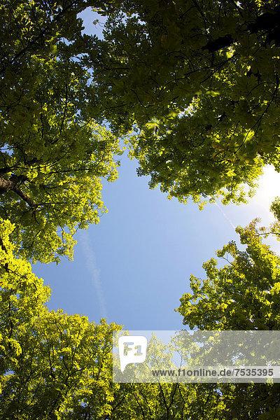 Baumkronen gegen blauen Himmel