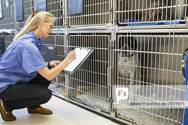 Tierärztliche Kontrolle der Hunde im Zwinger