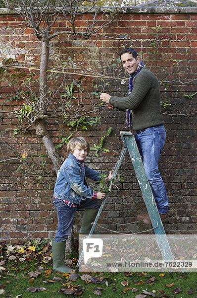Vater und Sohn arbeiten im Garten