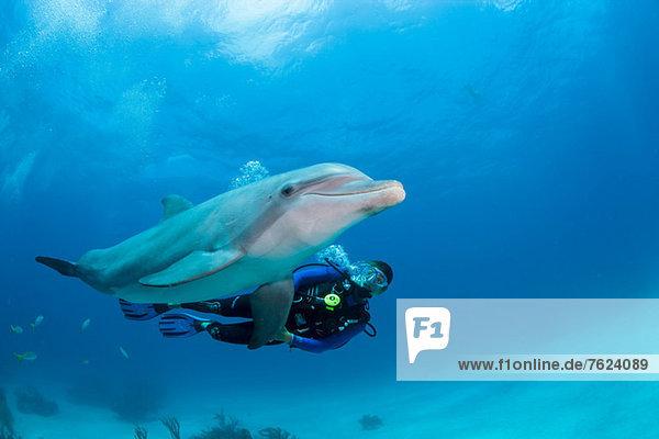 Taucher mit Delphin