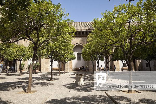 Orangenhof der Kathedrale Santa Maria de la Sede  Sevilla  Andalusien  Spanien  Europa