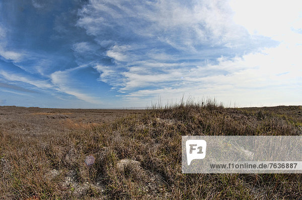 padre island  national  seashore  Texas  USA  United States  America  vegetation  sky  landscape