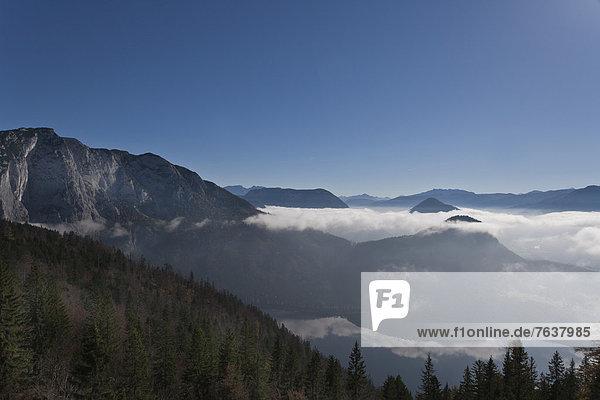 Berg Wolke Landschaft Wald Holz Österreich Nebelmeer