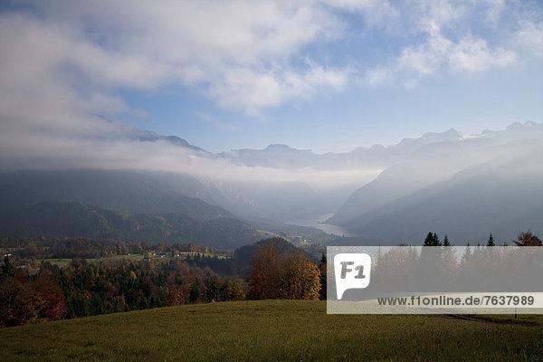 Helligkeit Europa Wald Nebel Holz Herbst Österreich Laub Stimmung Oberösterreich Helligkeit,Europa,Wald,Nebel,Holz,Herbst,Österreich,Laub,Stimmung,Oberösterreich