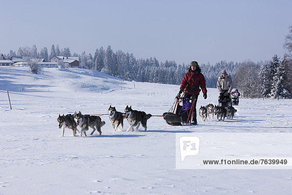 Winter Tier Tagesausflug Hund Wintersport