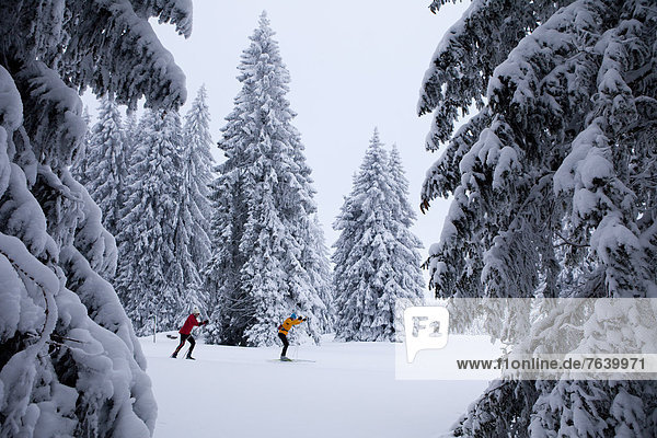 Winter Wald Holz Ski Langlaufski Wintersport