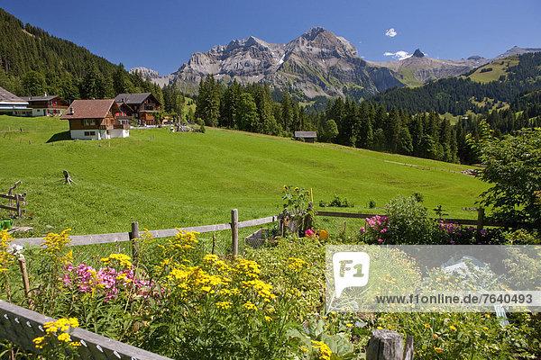 bauen Europa Berg Blume Wohnhaus Gebäude Dorf Wiese Bern Berner Oberland Schweiz