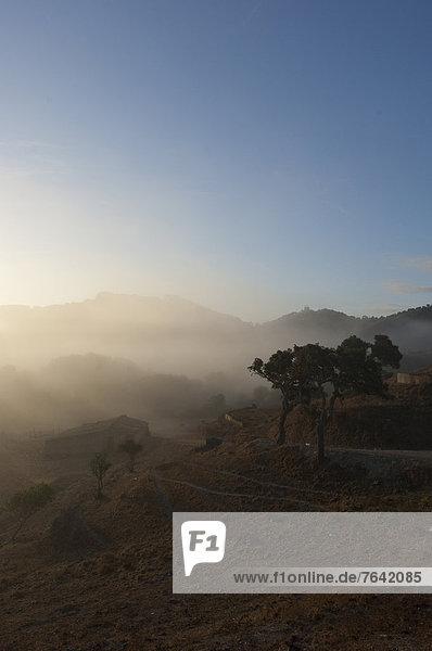 Landschaftlich schön  landschaftlich reizvoll  Europa  Baum  Landschaft  Ruine  Nebel  Algarve  Portugal
