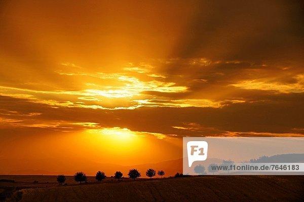 Truthuhn  nahe  Sonnenuntergang  Türkei
