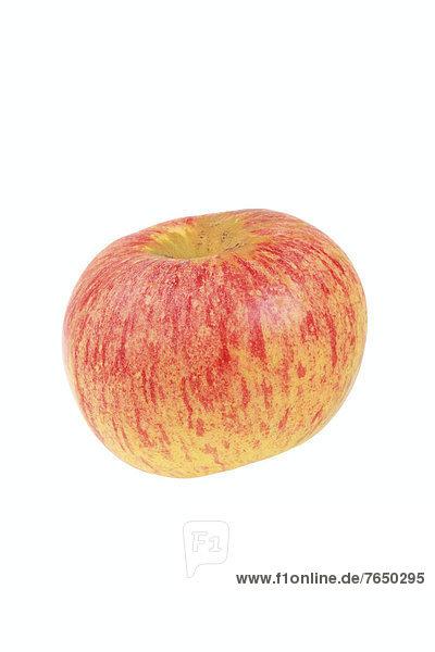 Apfel der Apfelsorte Wohlschmeckender aus Vierlanden